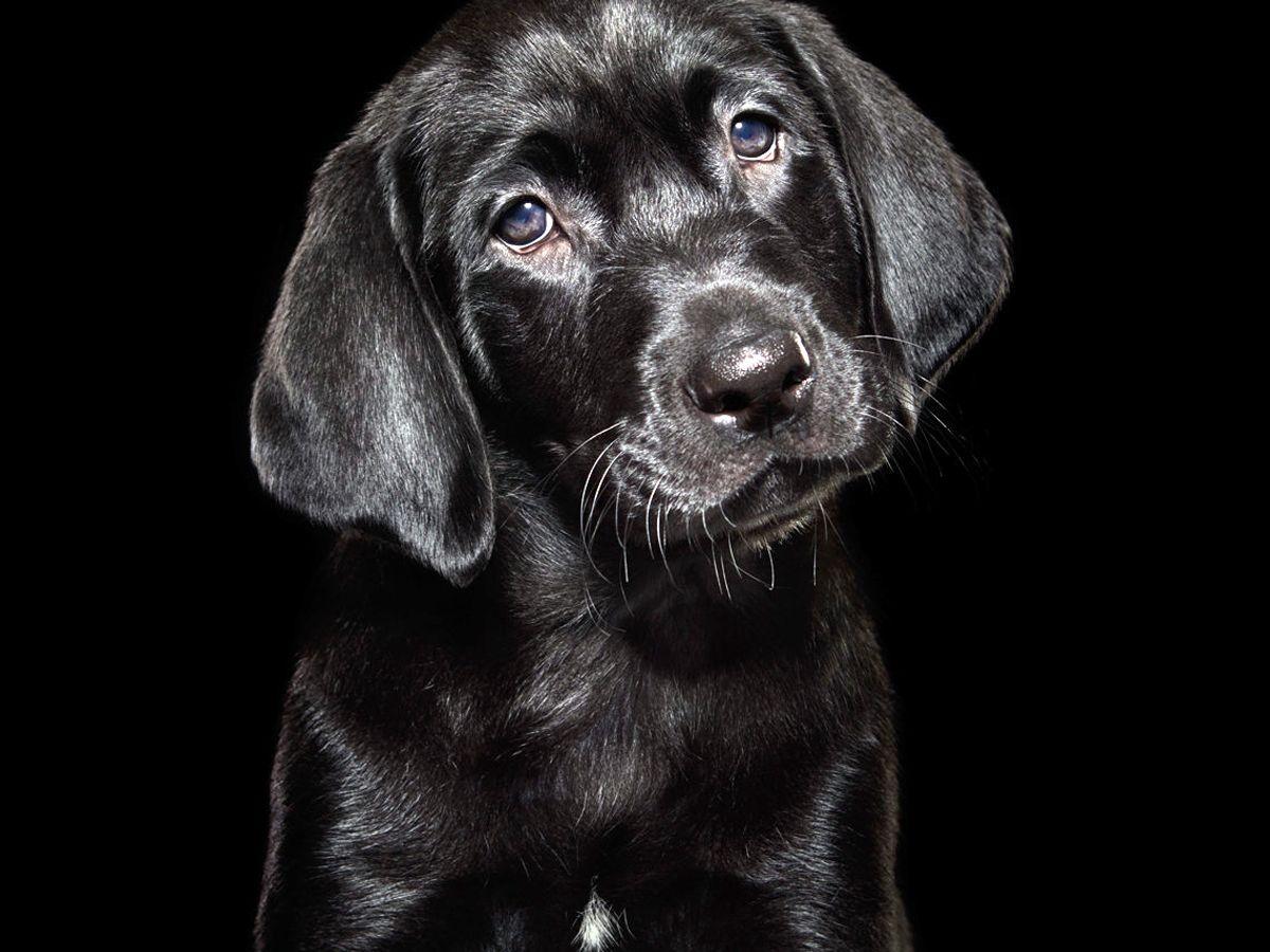 Έχασα τη γάτα μου – έχασα τον σκύλο μου τι κάνω: Η πλατφόρμα pet-finder.gr μπορεί να βοηθήσει