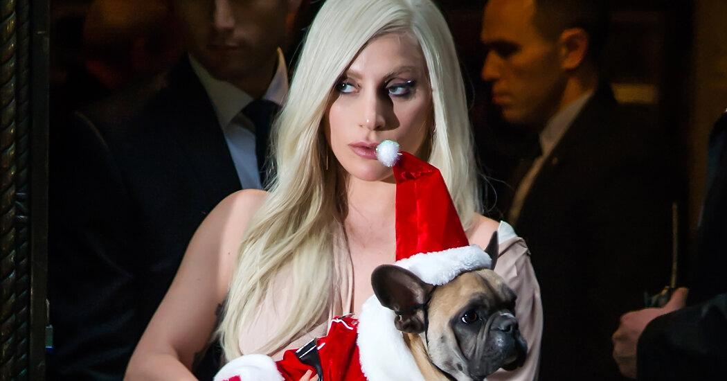 Lady Gaga: Μισό εκατομμύριο δολάρια αμοιβή για να βρει τα κλεμμένα σκυλάκια της